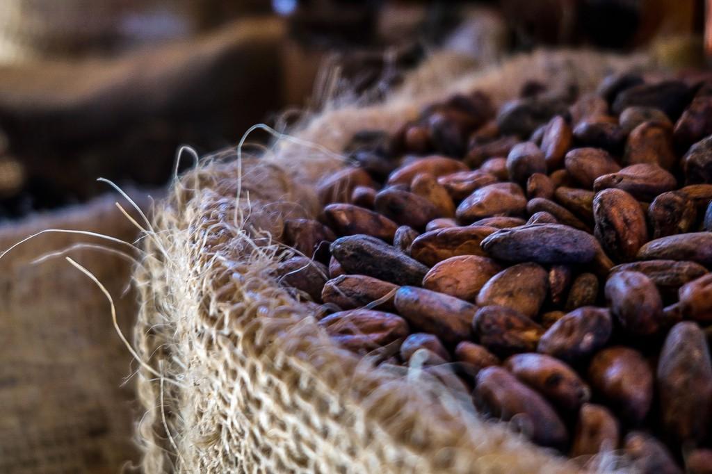 immagini del seme di cacao