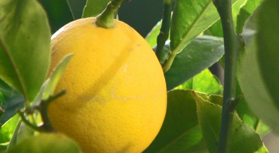 proprietà e benefici del limone