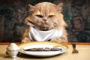 alimenti e cibi da non dare ai gatti
