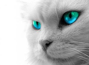 Cibi da non dare ai gatti, tutti i luoghi comuni da sfatare!