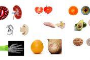 Gli alimenti che assomigliano agli organi che curano