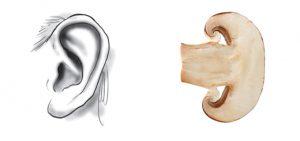 i funghi sono ottimi per l'udito