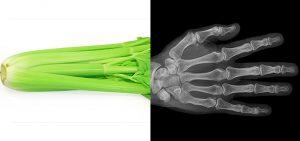 il sedano rinforza le ossa