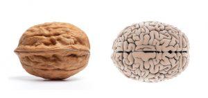 le noci sono utili per il cervello